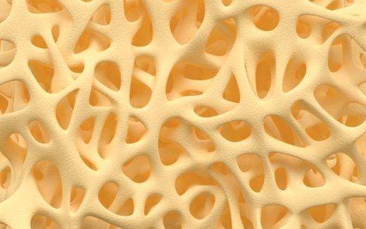 image of bone illus